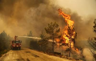 Турция взяла под контроль почти все лесные пожары: пострадали сотни людей