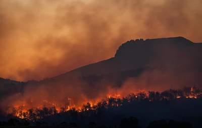 Не видно конца-края: как мир страдает от масштабных лесных пожаров