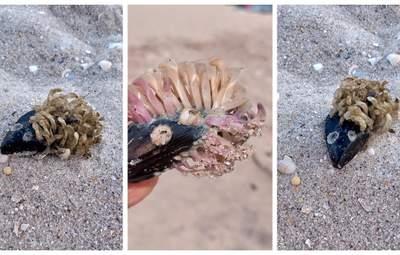 На берегу Азовского моря нашли причудливых созданий: фото