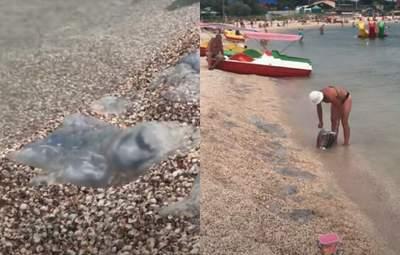Медузы продолжают атаковать пляжи Кирилловки: специальные сетки уже не помогают – видео