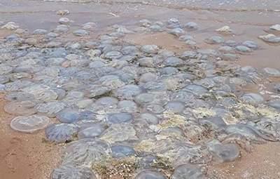 Не стоит оставлять на солнце мертвых медуз: объясняет биолог