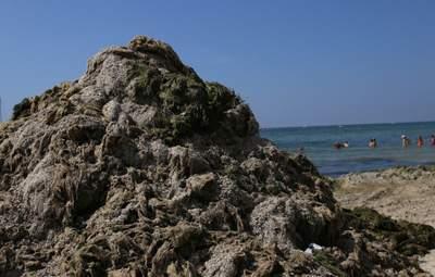 """В Железном Порту """"выросли"""" горы из водорослей: красноречивые фото"""
