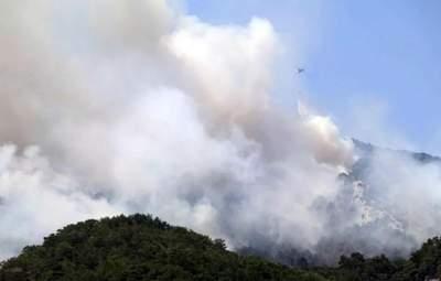 В Турции вспыхнули новые лесные пожары: жуткие фото