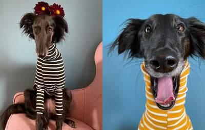 Хустка на довгій шиї або стильний гольф: господиня показує вражаючі вбрання своєї собаки