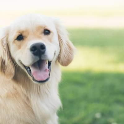 Не один за семь: ученые перечислили возраст собак в человеческий