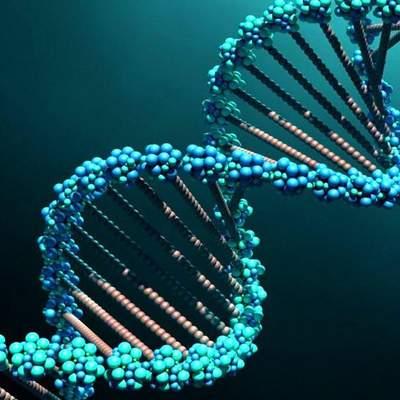 В современных людей обнаружили ДНК неизвестных предков