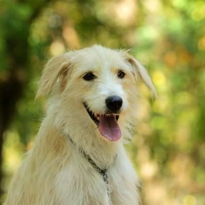 Во Львове проходит акция по бесплатному чипированию собак: куда привести своего любимца