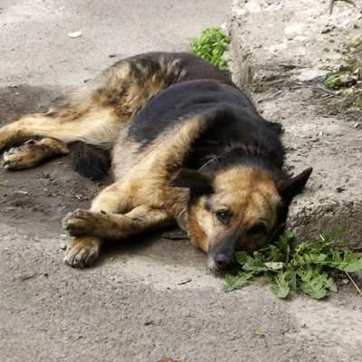 На Львовщине оштрафовали мужчину, который жестоко убил собаку
