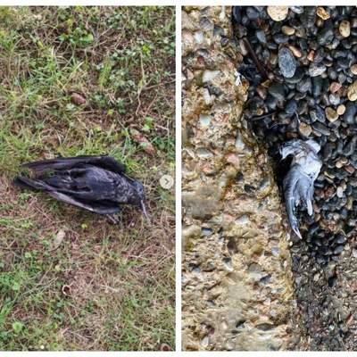 Последствия фейерверков: сеть ужаснули кадры мертвых птиц и животных в Украине