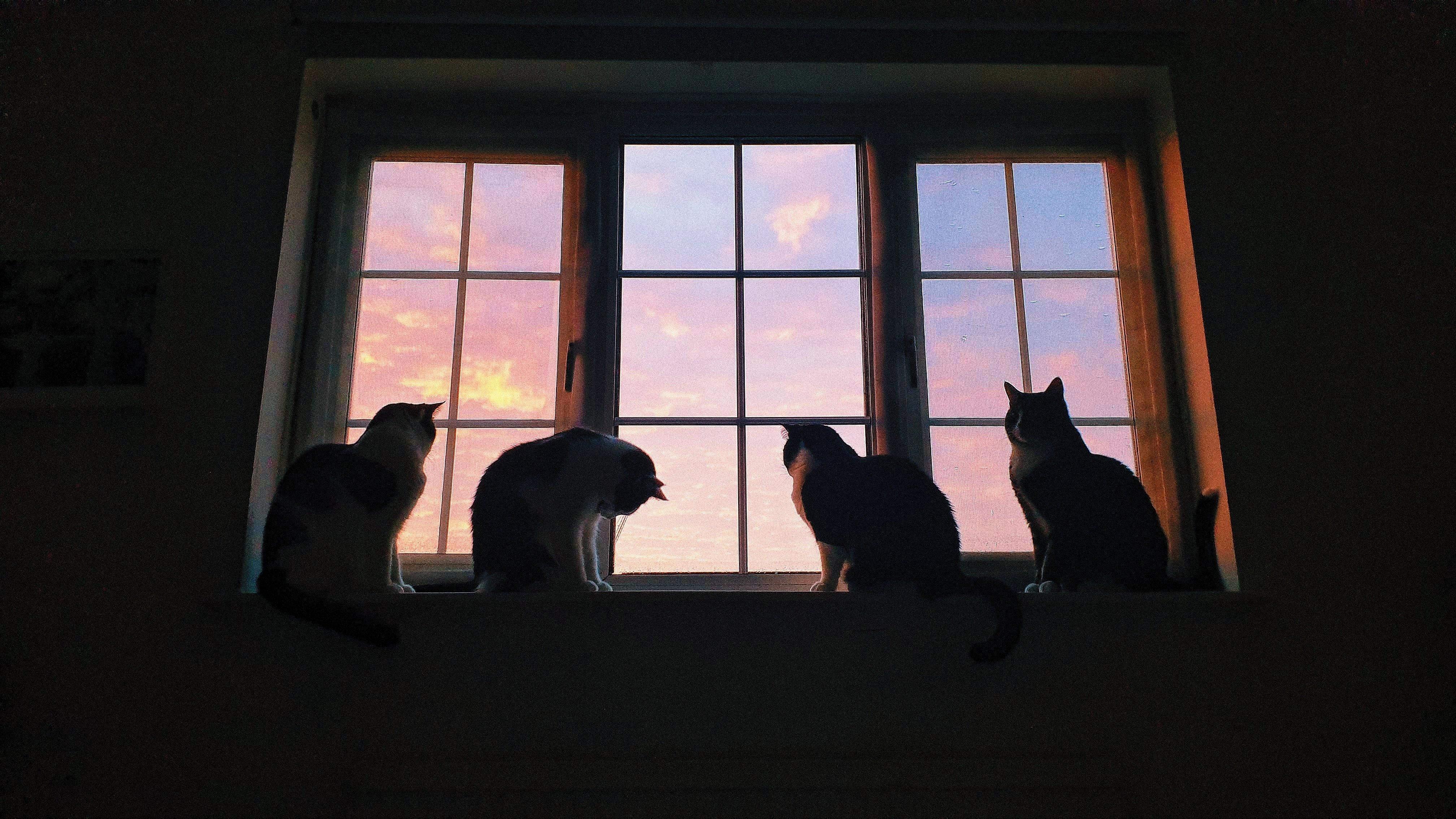 Котяча родина живе дуже дружно