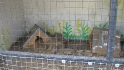 Разгромленный зоопарк в Луганске: животные убежали в город или сидят под обломками (Фото)