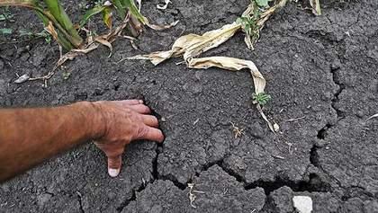 На Крым свалилось еще одно несчастье — из-за недостатка воды пропало 50% урожая