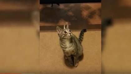 У мережі показали найсмішніші відео із тваринами 2015 року