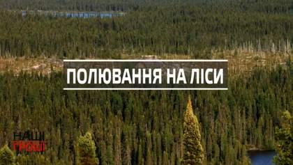 Как украинские чиновники нагло приватизируют огромные массивы лесов