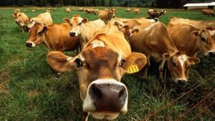 Україна ризикує повністю втратити молочну галузь
