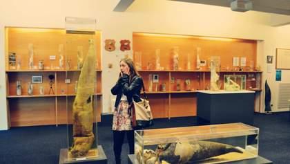 Колекції фалосів та волосся: найдивніші музеї світу, які справді існують