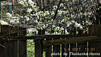 Фото дня: на Одещині розцвіли дерева