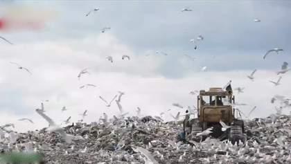 Топ-5 міфів про сміття і чому проблема в Україні не вирішується