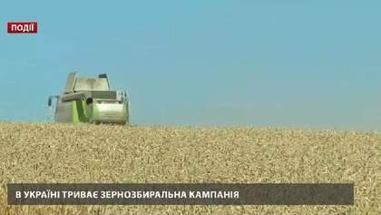 В Украине продолжается зерноуборочная кампания