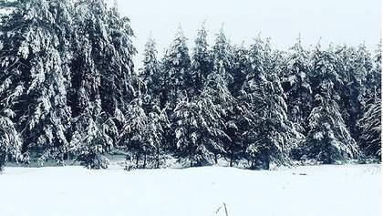 Луганщину засыпало толстым слоем снега: в сети публикуют красивые фото