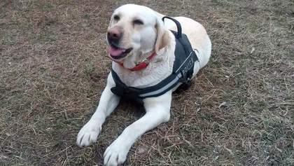 Служебный пес мгновенно нашел пропавшего мальчика в Краматорске
