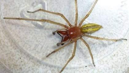 Украинца укусил самый ядовитый паук в мире