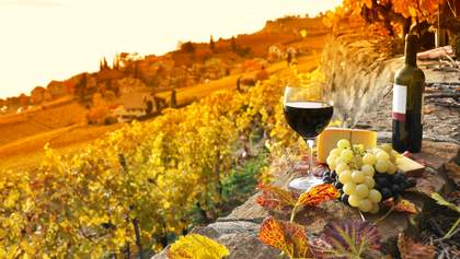 Даст ли виноделие Украины миллиардный налог: мнение эксперта