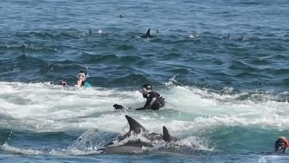 Кит проковтнув дайвера, але одразу ж виплюнув його назад в океан: фото