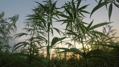 Сколько украинцев поддерживают легализацию медицинской марихуаны