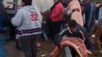 Фура з свинячими тушами перекинулася на дорозі, люди почали красти м'ясо: фото і відео 18+