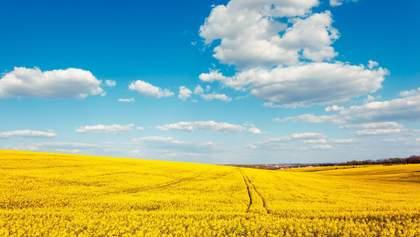 По скільки в Україні продають землю під мораторієм і де найдорожче – інфографіка