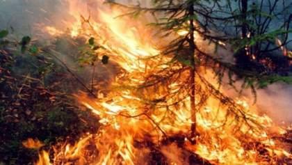 Сибирские пожары: в России ищут виновных, а не гасят пламя
