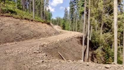 """Сын Луценко """"Саша-Лесоруб"""" реально контролирует всю лесную отрасль, – блогер Иванов"""