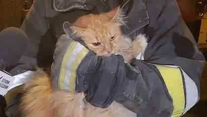 З-під завалів будинку у Дрогобичі рятувальники витягнули кота: зворушливе фото