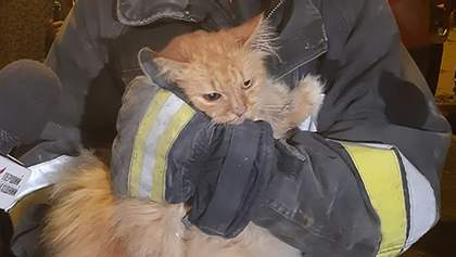 Из-под завалов дома в Дрогобыче спасатели вытащили кота: трогательное фото