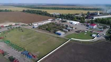 """Несмотря на засуху, """"Укрлендфарминг"""" рассчитывает на хороший урожай рапса"""