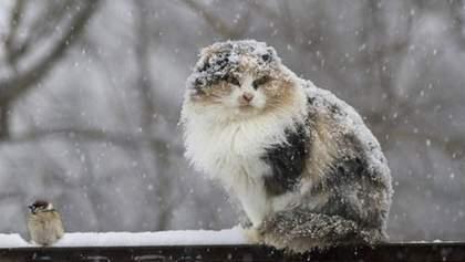 Сніг, хуртовини і шквали вітру: де в Україні чекати негоду