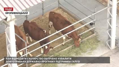 Аби відродити скотарство потрібно ухвалити довготривалу державну програму підтримки галузі