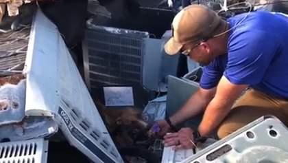 На Багамах через месяц после урагана под завалами нашли живую собаку: трогательное видео
