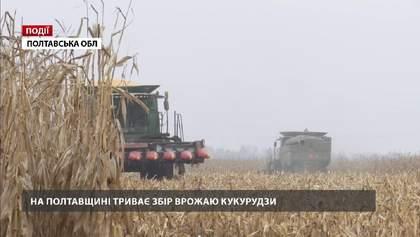 На Полтавщине продолжается сбор урожая кукурузы