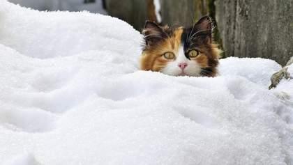 Коли в Україні випаде сніг: прогноз