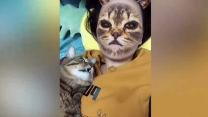 Видео дня: как коты реагируют на животные фильтры в Instagram