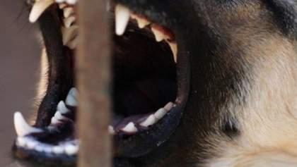 В Белой Церкви хозяйка натравила своего пса на прохожих