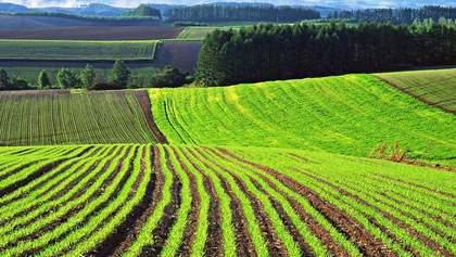 На купівлю землі встановлять трирівневе обмеження, – радник прем'єр-міністра Мушак