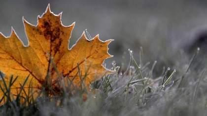 Прогноз погоды на 21 января: в Украине будет последний теплый день перед снегопадом