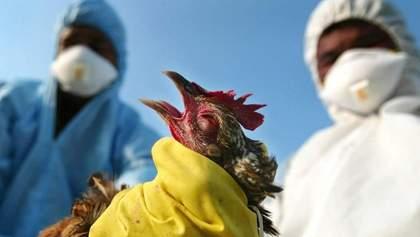 Через пташиний грип ЄС раптово призупинив імпорт з України м'яса птиці: причина