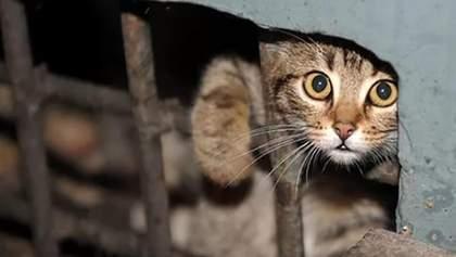 Замурованные подвалы – смерть котам: как зоозащитники в Киеве спасают уличных животных