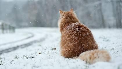 Прогноз погоди на 8 лютого: в Україні все ще буде холодно, але без опадів