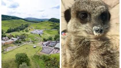 Лемури, сурікати і лами: парк дикої природи продається з усіма його мешканцями