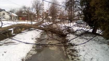 Потужні вітри на Прикарпатті повалили дерева і позривали дахи: фото і відео